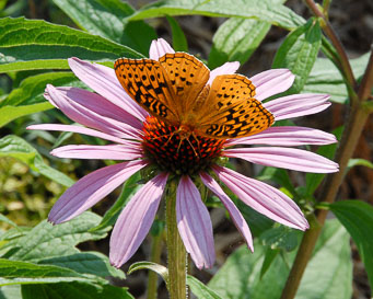 Butterfly and Flower - Photo Copyright 2020 Brian Raub